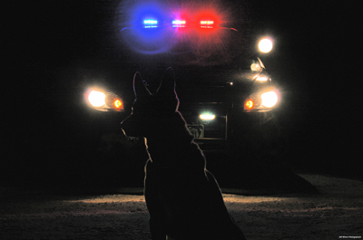 K9 in front of patrol vehicle