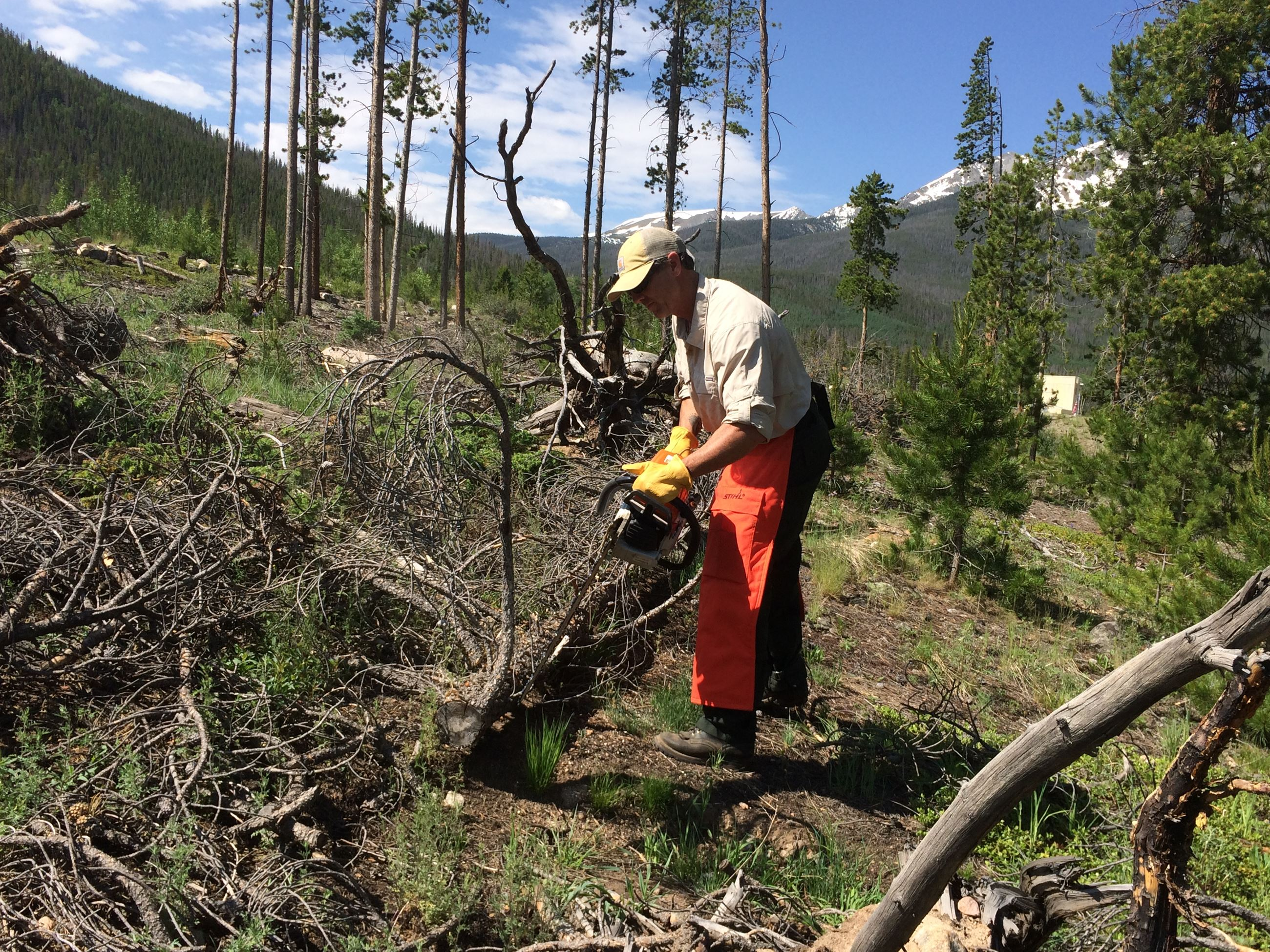 Man cutting trees for defensible space