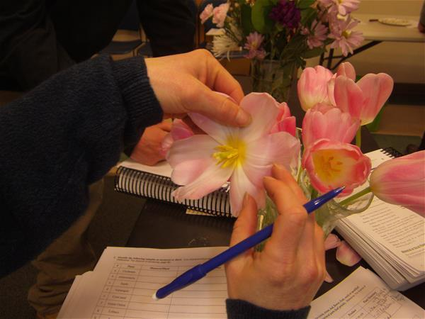 Summit County Master Gardener - Botany activity