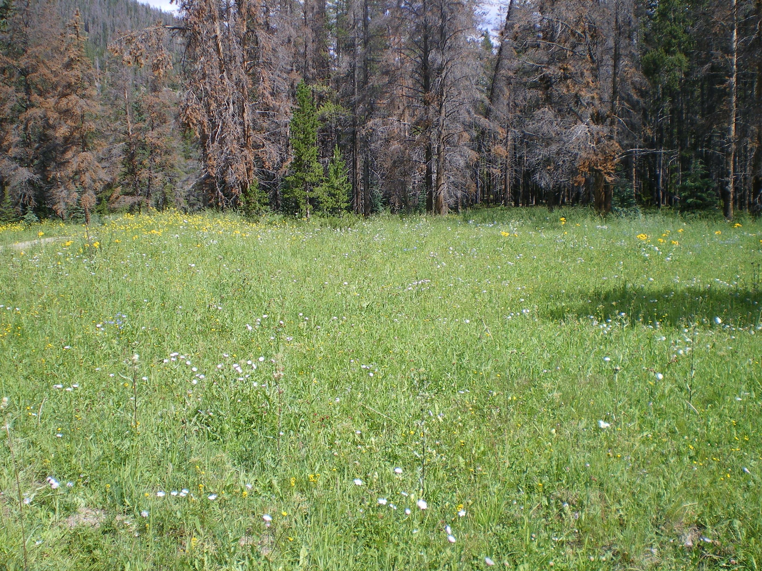 Picture of Parkville meadow