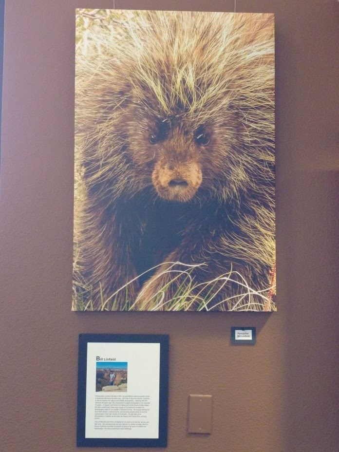 Photo of a porcupine&#39s face