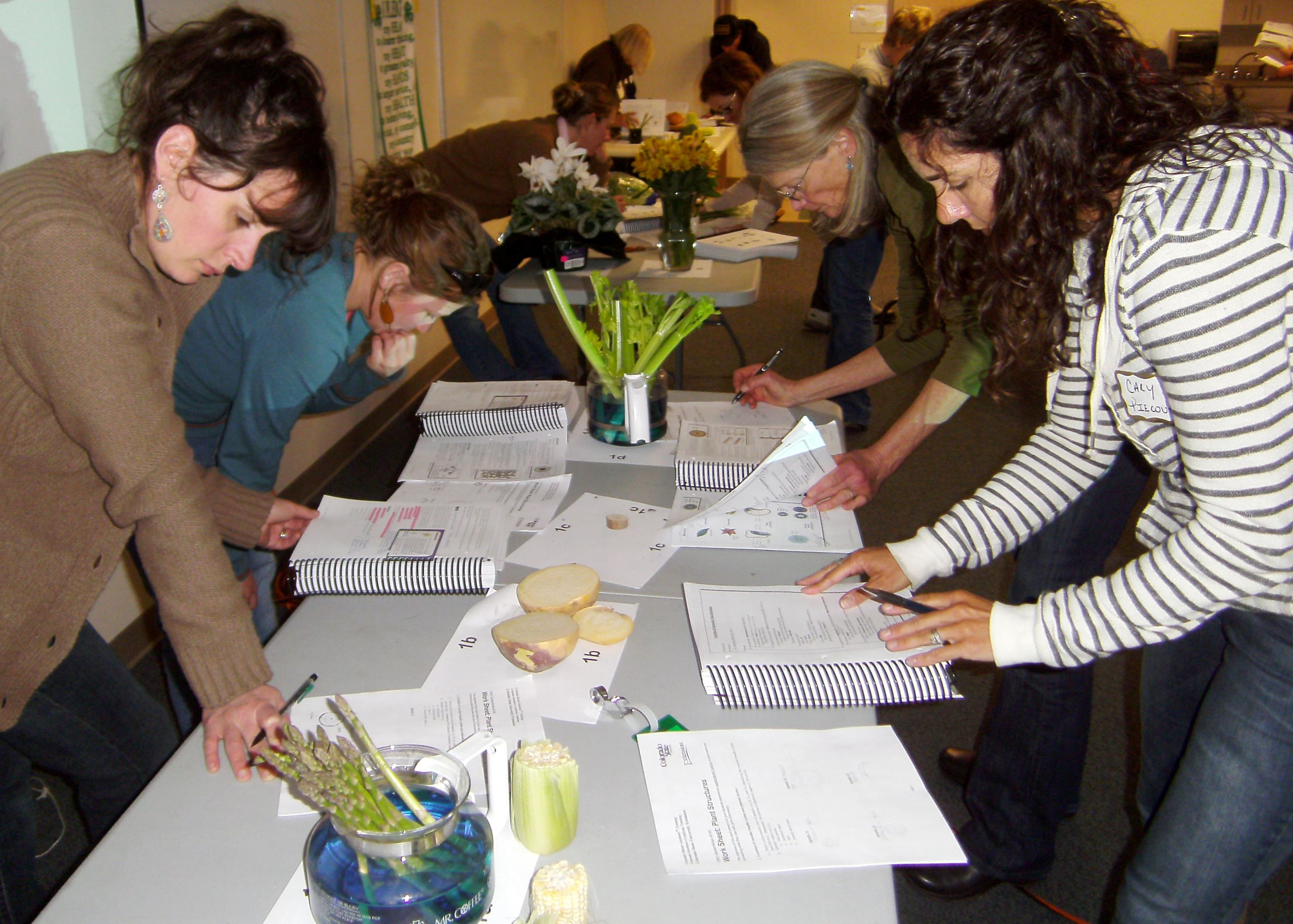 Photo of students examining plants.