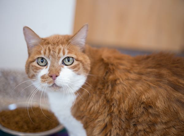 June is Adopt-A-Cat Month at the Animal Shelter