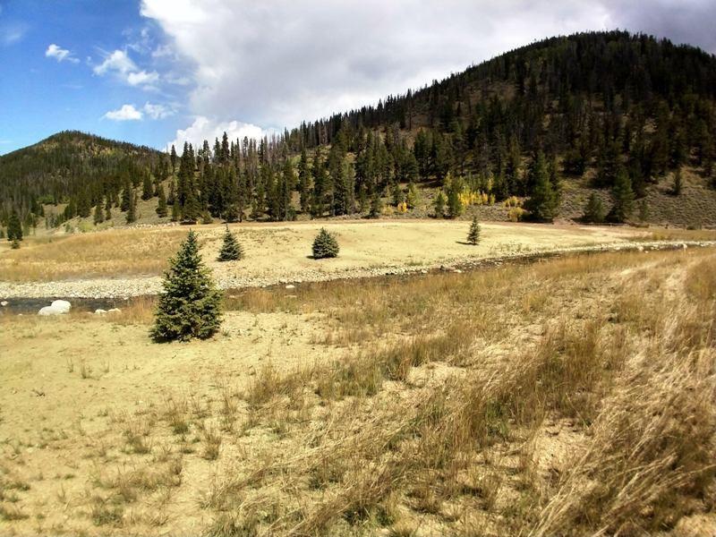 Upland Trees
