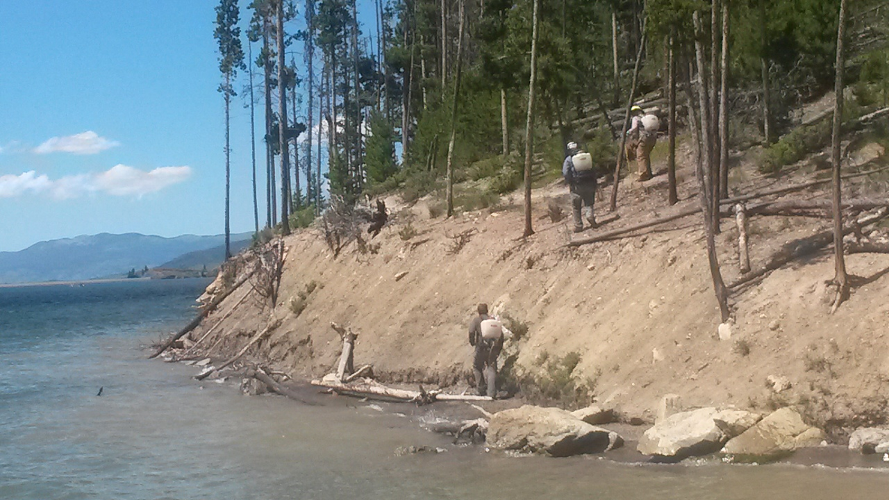 Photo of crews treating noxious weeds along the shore of Dillon Reservoir.