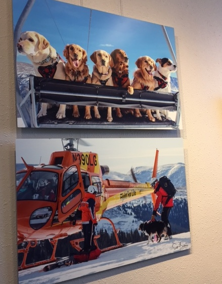 Photos of avalanche dogs and a rescue helicopter.
