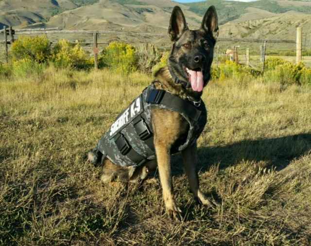 Summit County Sheriff's Office K9 Danny Has Received Body Armor